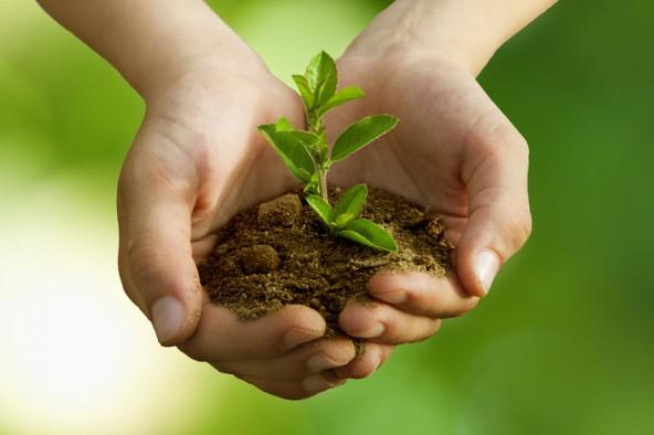 La valorisation agronomique